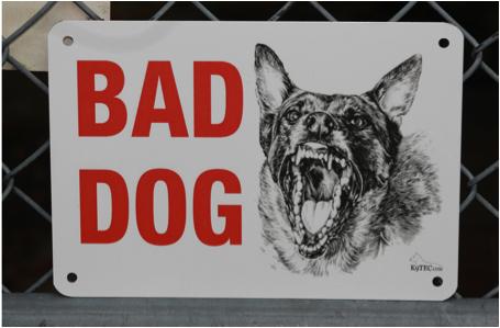 bad_dog.png
